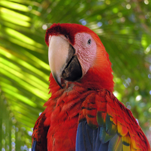 Student Tours to Costa Rica